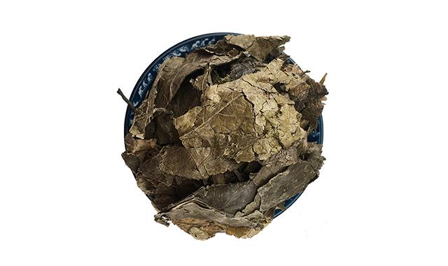 1.Eucommia leaf