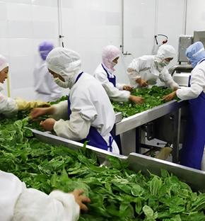 Epimedium Planting  Base