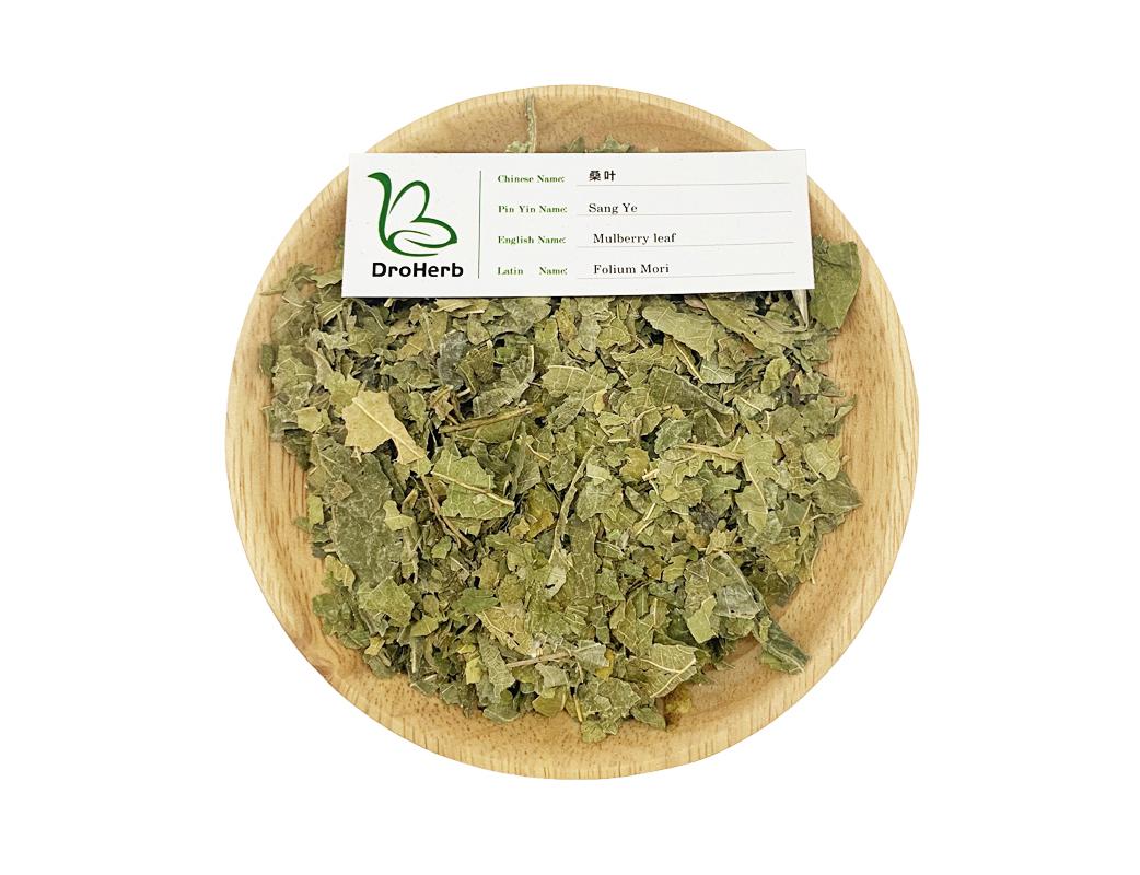 Medical herbs dried Folium Mori sang ye mulberry leaf