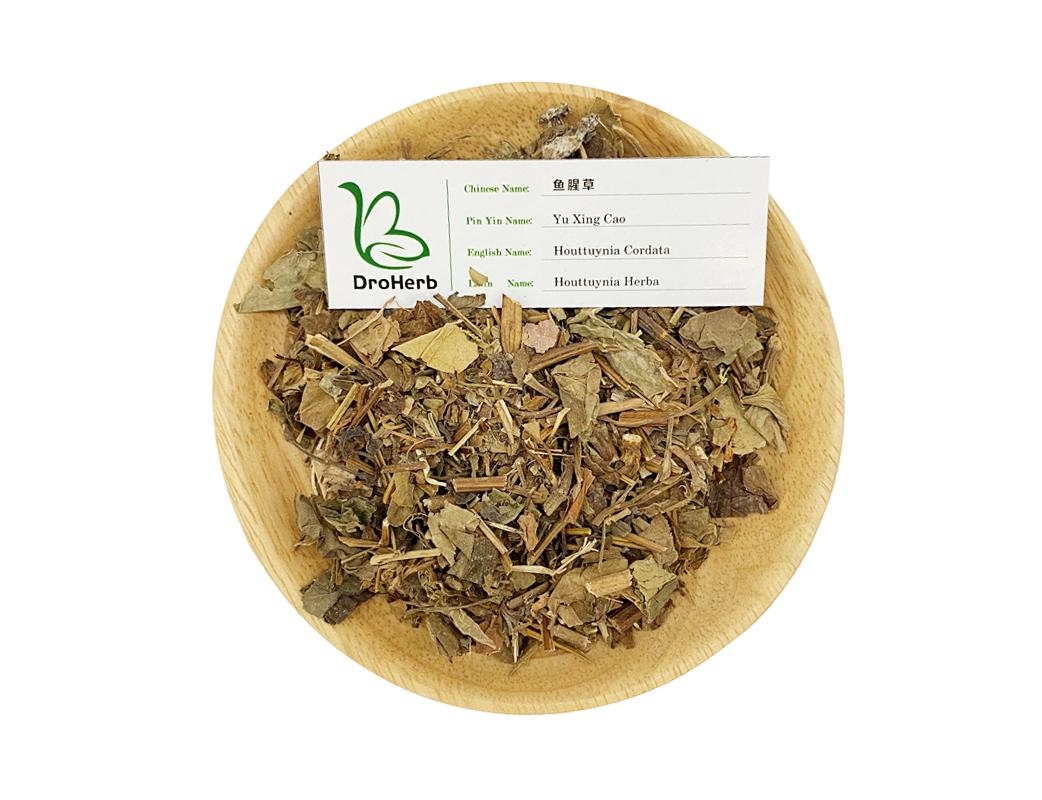 Traditional medcinal herbs houttuynia cordata roots Yu Xing Cao